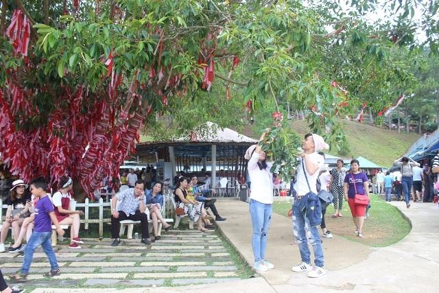 Đôi bạn trẻ treo dải lụa hồng, đỏ trên cây tình duyên tại Thung lũng Tình yêu