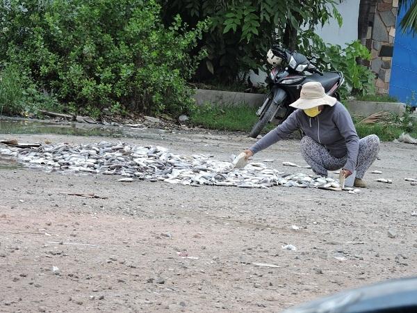 Người dân mang cá đến cổng các công ty chế biến hải sản để đổ