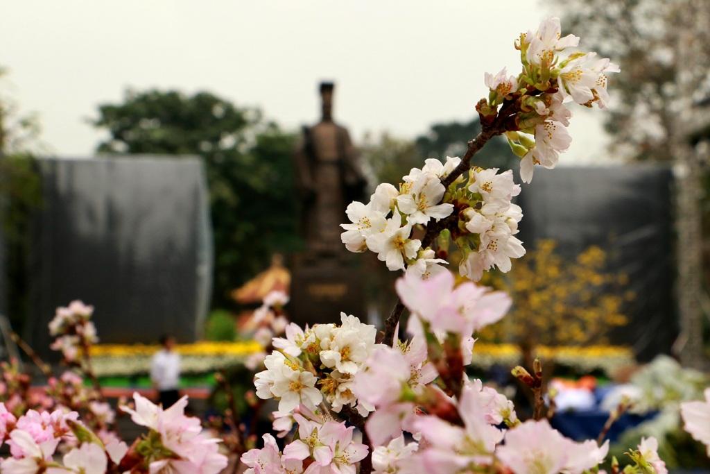 Một trong những chương trình chính trong khuôn khổ của sự kiện Tuần lễ văn hóa Việt Nam - Nhật Bản là hoạt động trưng bày hoa anh đào xung quanh khu vực vườn hoa Lý Thái Tổ, Hà Nội.