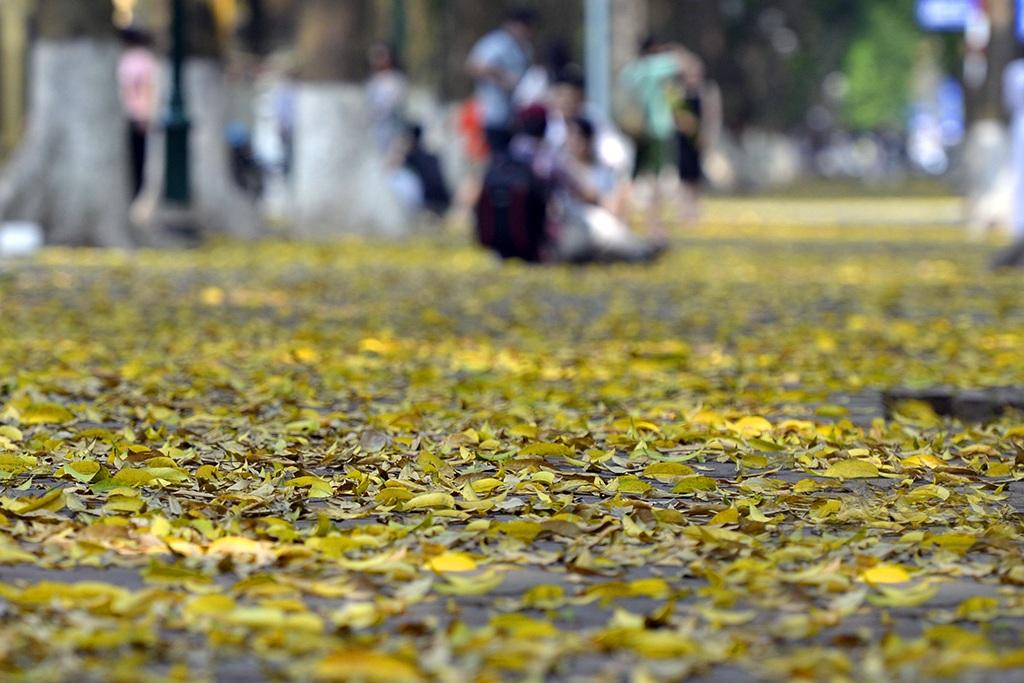 Cả một đoạn vỉa hè dài ngập lá sấu rụng.