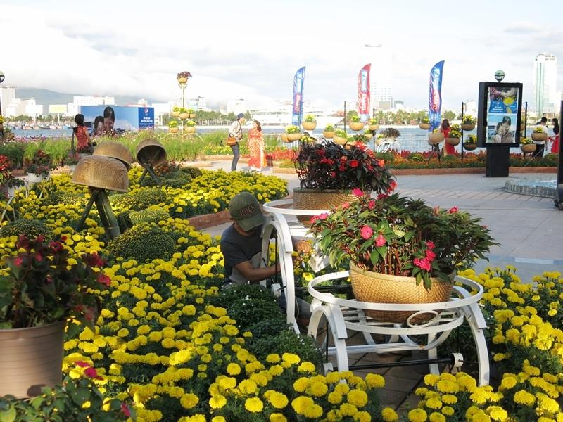 Đến sáng 3/2 (nhằm 25 tháng Chạp), các cung đường hoa xuân Đà Nẵng vẫn đang dần hoàn thiện ngày càng rực rỡ hơn sẵn sàng đón Tết Bính Thân 2016