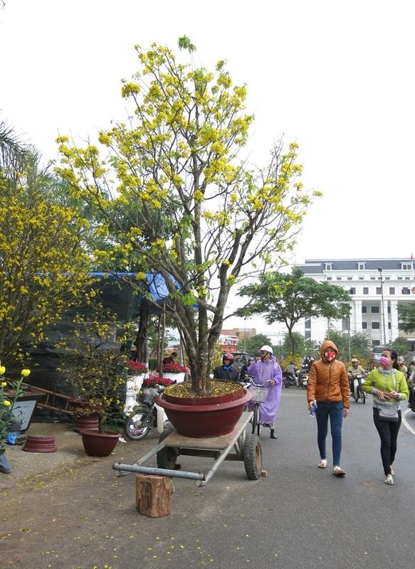 Người dân và du khách ra chợ hoa bất kể khi trời đang mưa phùn