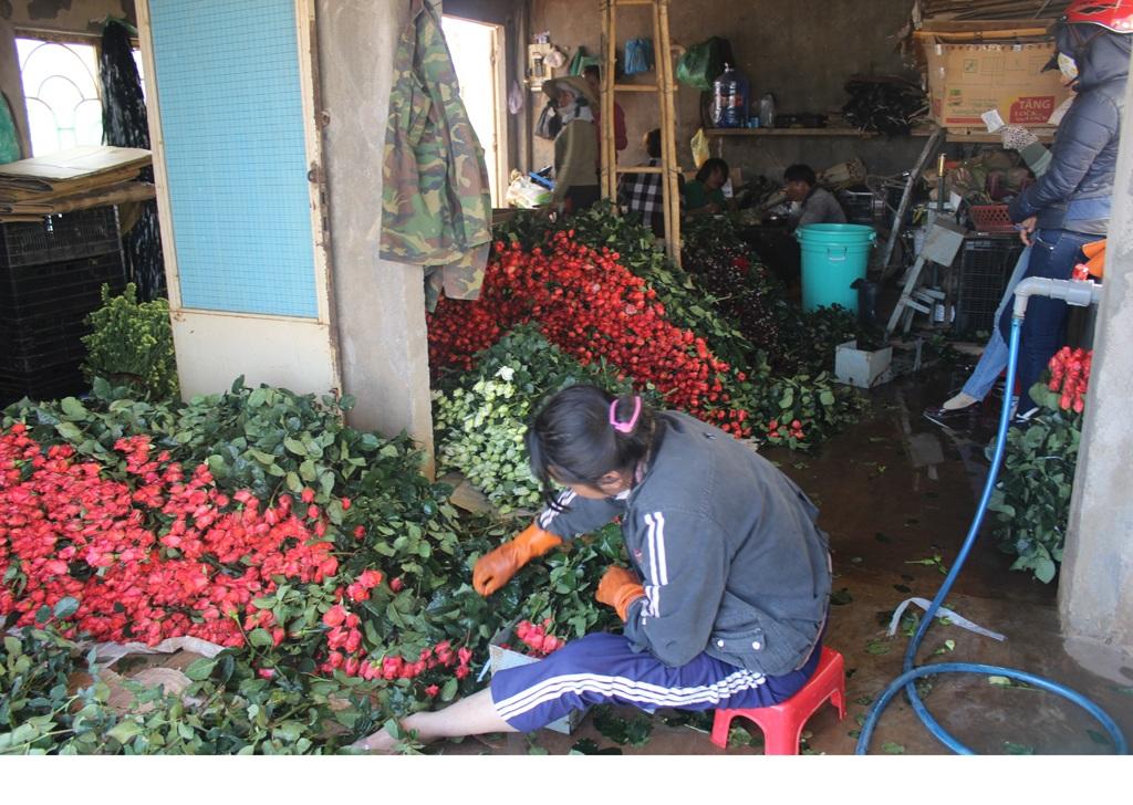 """Giá hoa cao nên nhiều nhà vườn """"găm"""" hàng để bán lẻ"""