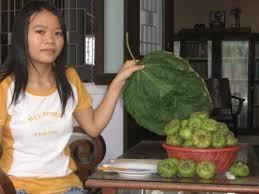 Lá và trái vả