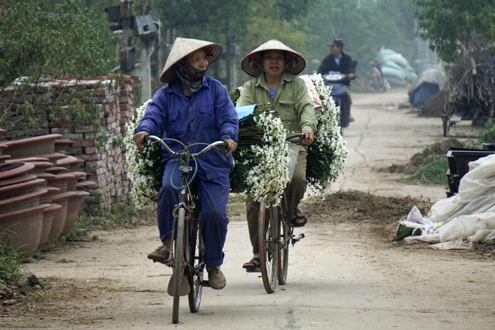 Dễ dàng bắt gặp những chuyến xe hoa cuối ngày bên cánh đồng trồng hoa Nhật Tân.