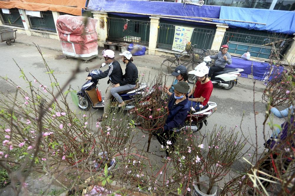 Những cành đào nở sớm đã được mang ra chợ hoa Quảng An bày bán từ nhiều ngày nay, giá cả hiện cũng khá hợp lí.