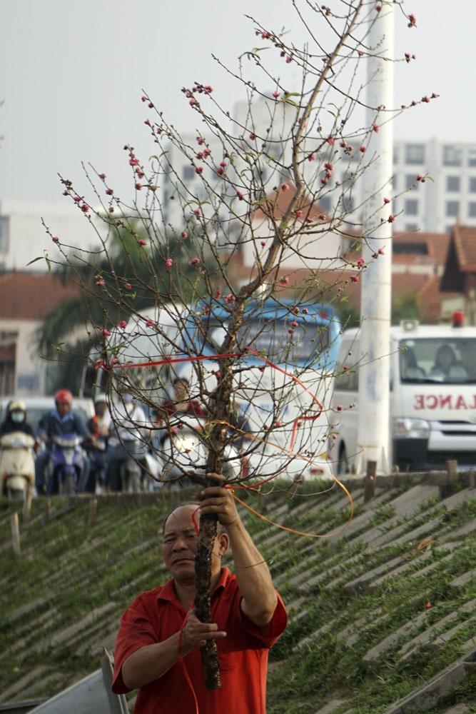 Một người bán hoa đang chuẩn bị mang cành đào cho khách xem. Cành đào này giá chỉ vài trăm nghìn đồng.