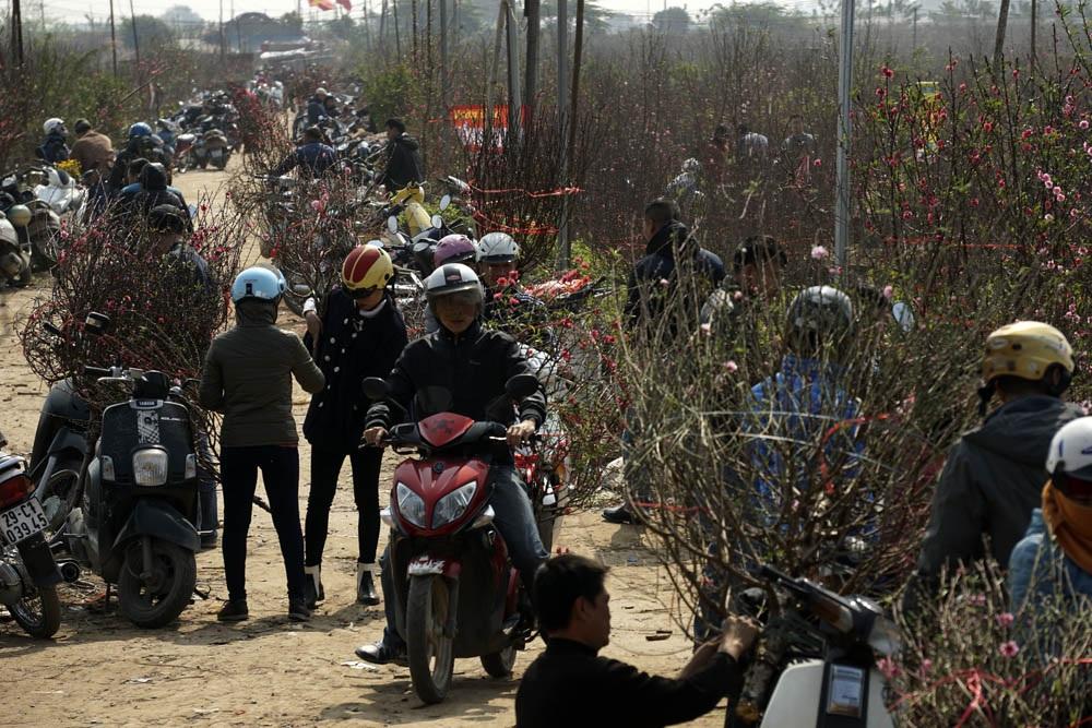 Người mua đào đổ về Nhật Tân, vào tận những nơi trồng sâu xa nhất để xuống vườn chọn đào. Vườn đào Nhật Tân những ngày giáp Tết đã chuyển thành chợ hoa.