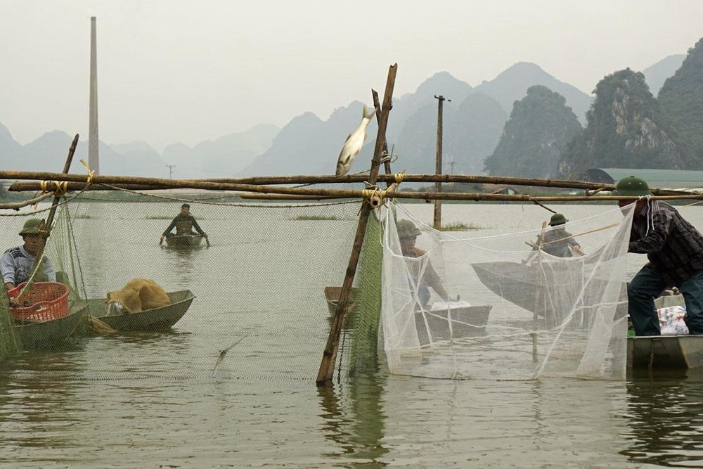 Một vùng hồ được thầu để nuôi thả cá. Theo những người nuôi cá ở đây thì họ chỉ việc thả cá giống chứ không cho ăn. Làm như thế là để môi trường sống gần với tự nhiên, cá khi thu hoạch sẽ ngon hơn nhiều.