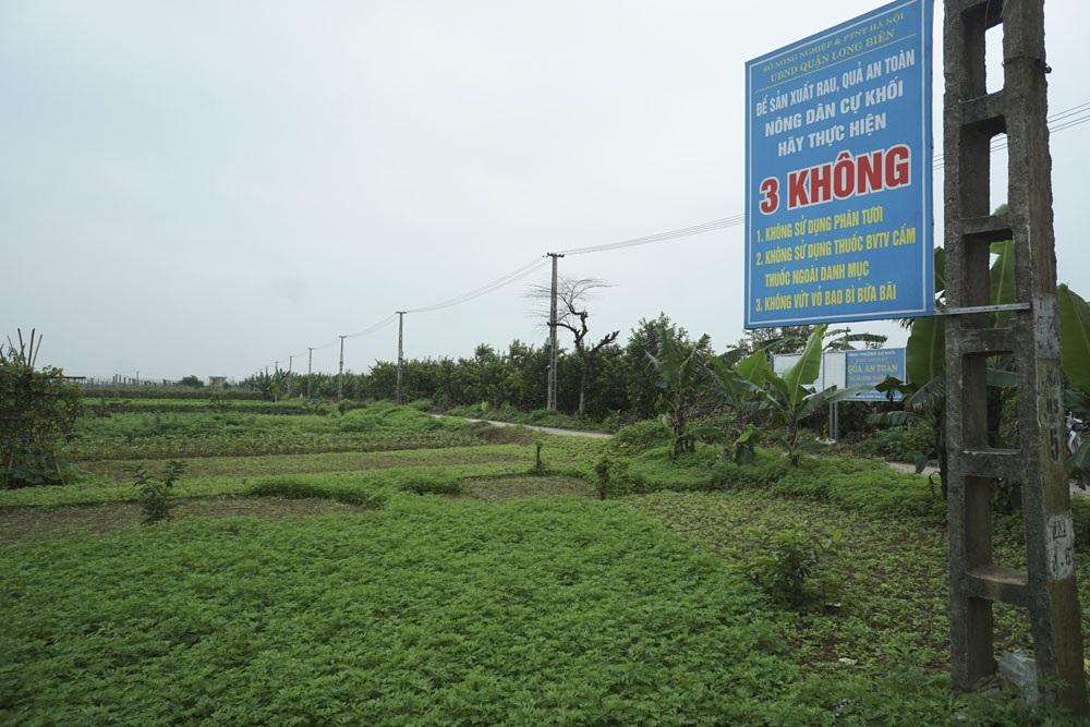 Tại vùng trồng rau quả an toàn thuộc phường Cự Khối, quận Long Biên - Hà Nội, nhiều biển cảnh báo lớn được ghi rõ ràng các loại thuốc cấm sử dụng; 3 không... ngay trên đồng ruộng, trong đó có việc không vứt bao bì thuốc BVTV bừa bãi.