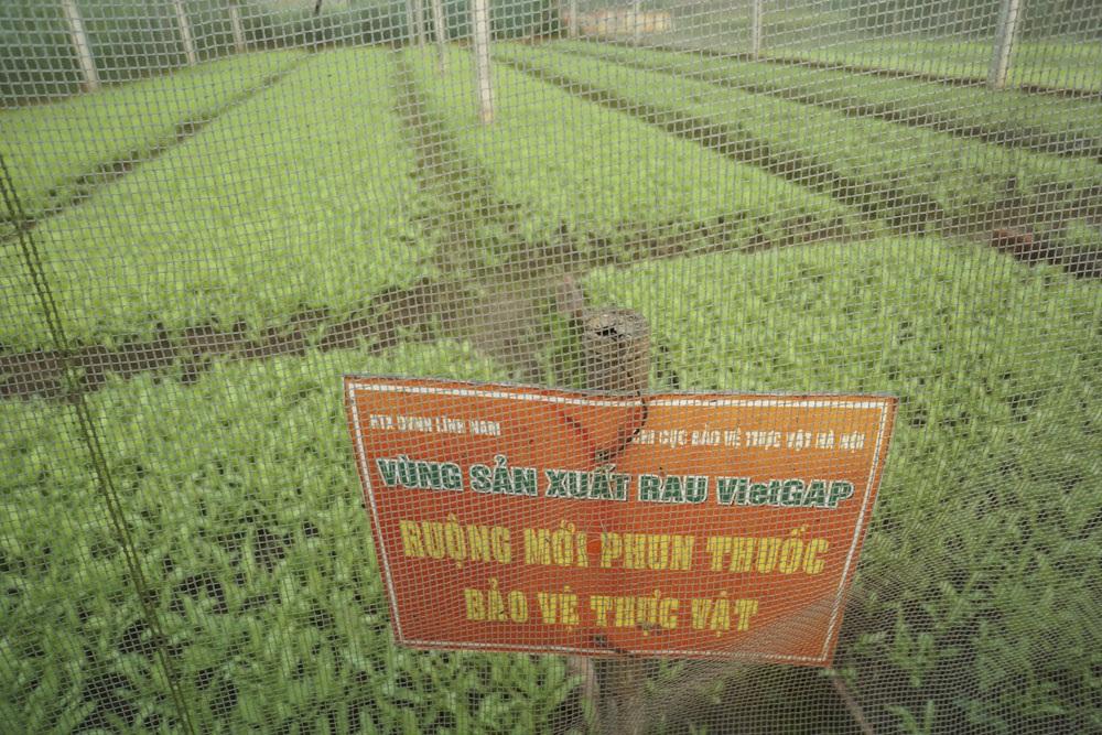 Lác đác có ruộng rau được cắm biển cảnh báo như thế này.