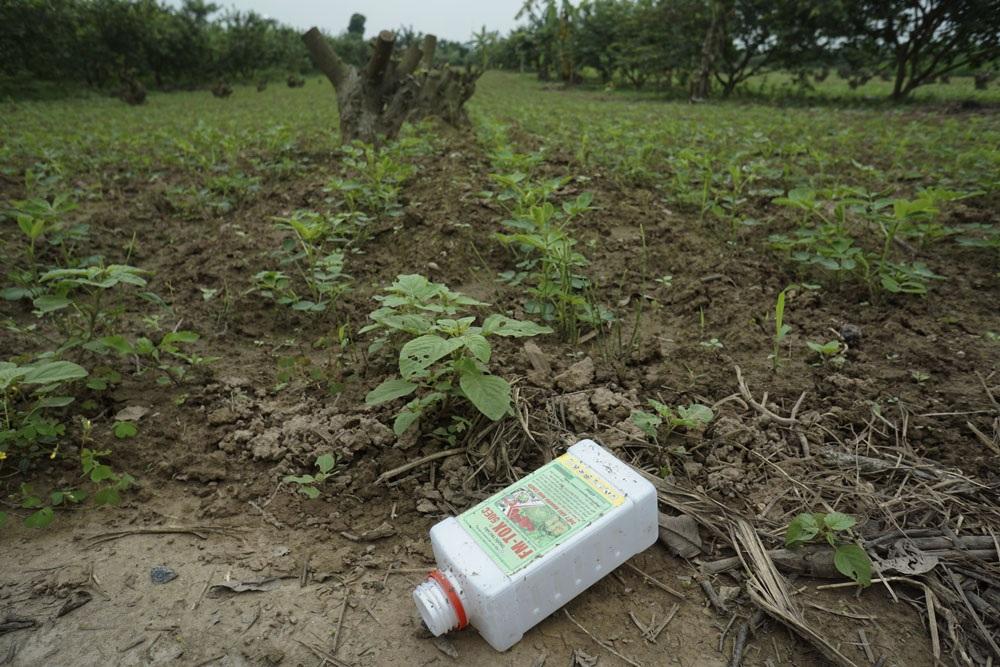 Phần lớn trên các vỏ bao bì đều cảnh báo về yếu tố độc hại của thuốc BVTV và phải sử dụng đúng cách để tránh ảnh hưởng đến con người và môi trường. Trong ảnh là vỏ chai thuốc trừ sâu FM-TOX 50EC vứt lăn lóc bên ruộng hoa màu, loại thuốc này bị cấm sử dụng trên rau.