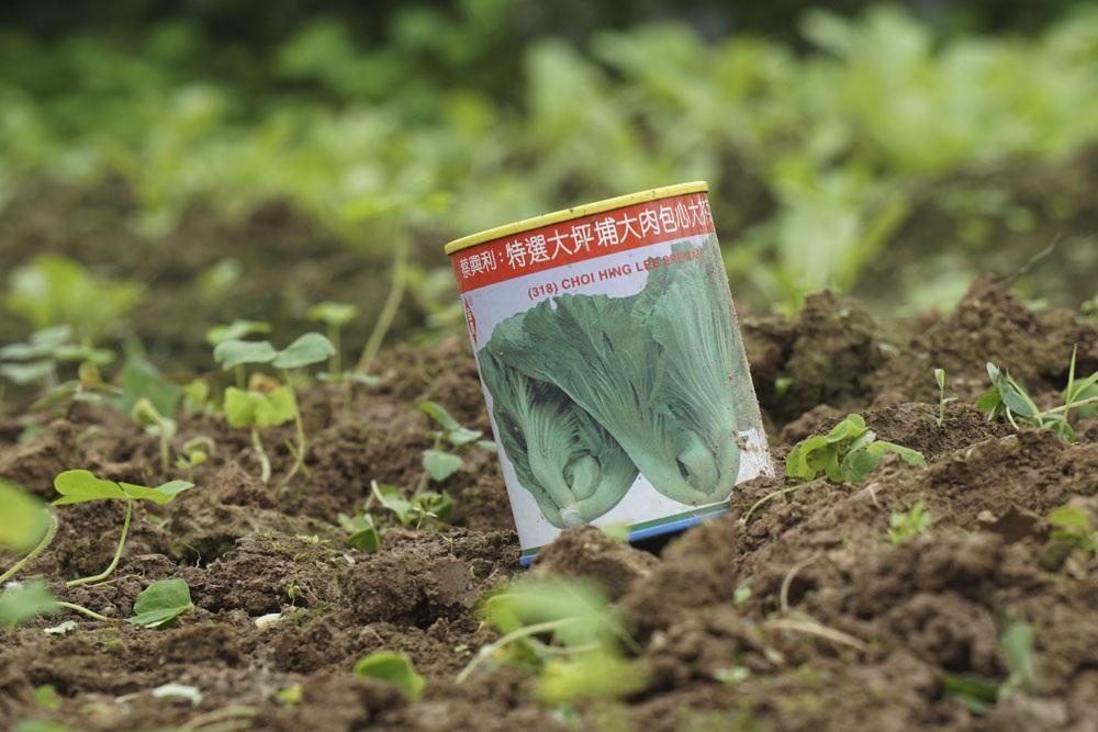 Một vỏ đựng hạt giống nhập ngoại mang tên Tòa Sại (cải dưa).
