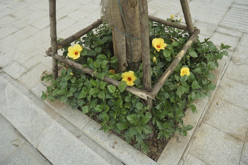 Đây là con đường được trồng khá nhiều hoa dưới các gốc cây.