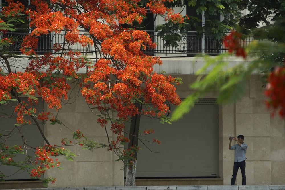 Rất nhiều người đã phải dừng lại chụp một vài kiểu ảnh những chùm hoa phượng đỏ rực rỡ.