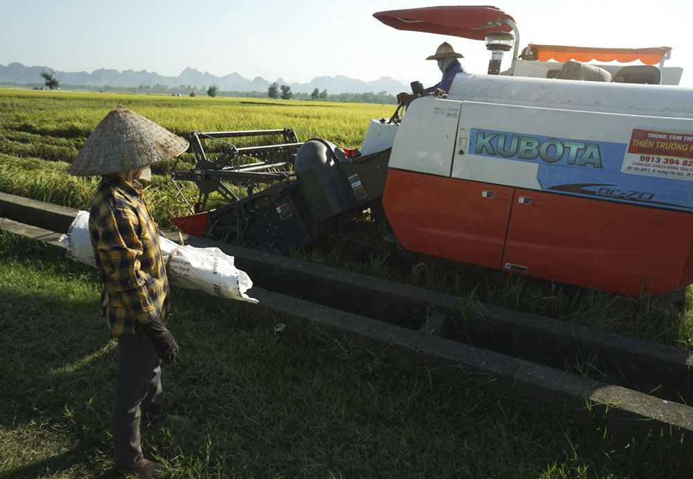 Máy cần chưa đến 4 phút để gặt xong một sào lúa, giá thuê là 150 nghìn đồng.