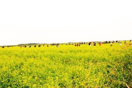 Cánh đồng hoa cải vàng ở xã Hồng Lý rộng hơn 10ha , được đánh giá là đẹp nhất nhì khu vực Nam đồng bằng sông Hồng