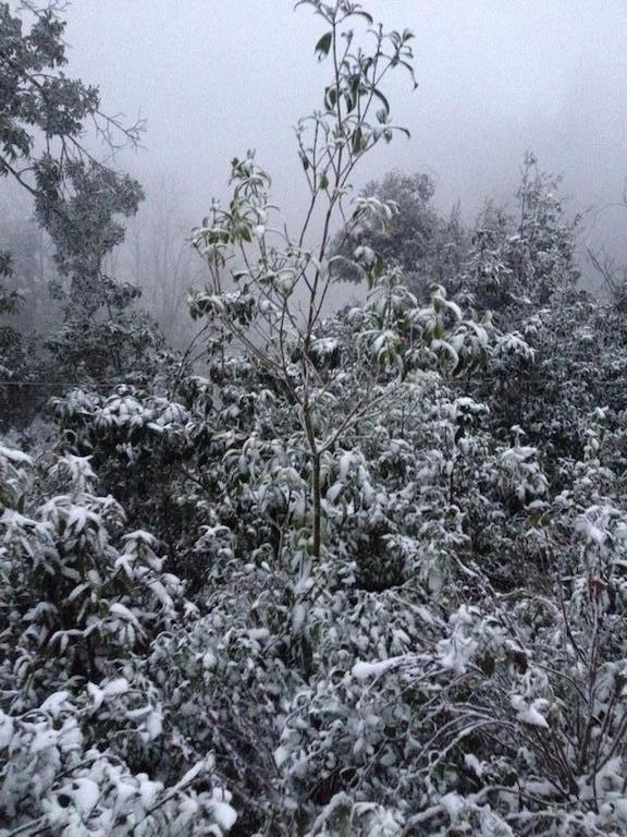 Tuyết phủ trắng miền Tây xứ Nghệ - 5