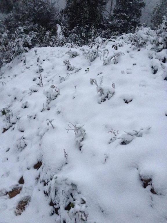 Tuyết phủ trắng trời Buộc Mú, xã Na Ngoi, huyện biên giới Kỳ Sơn.
