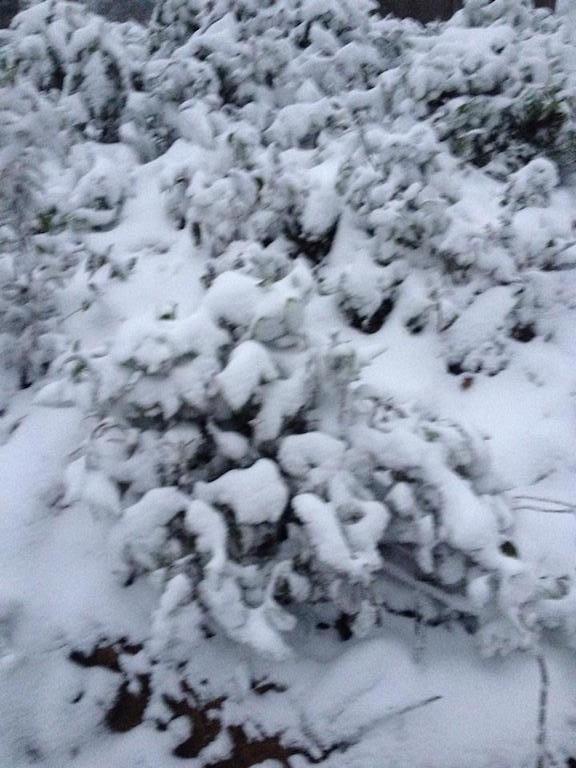 Tuyết phủ trắng miền Tây xứ Nghệ - 6