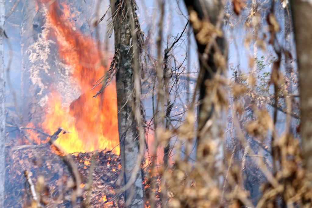 Ngọn lửa đi qua, rừng thành tro tàn.