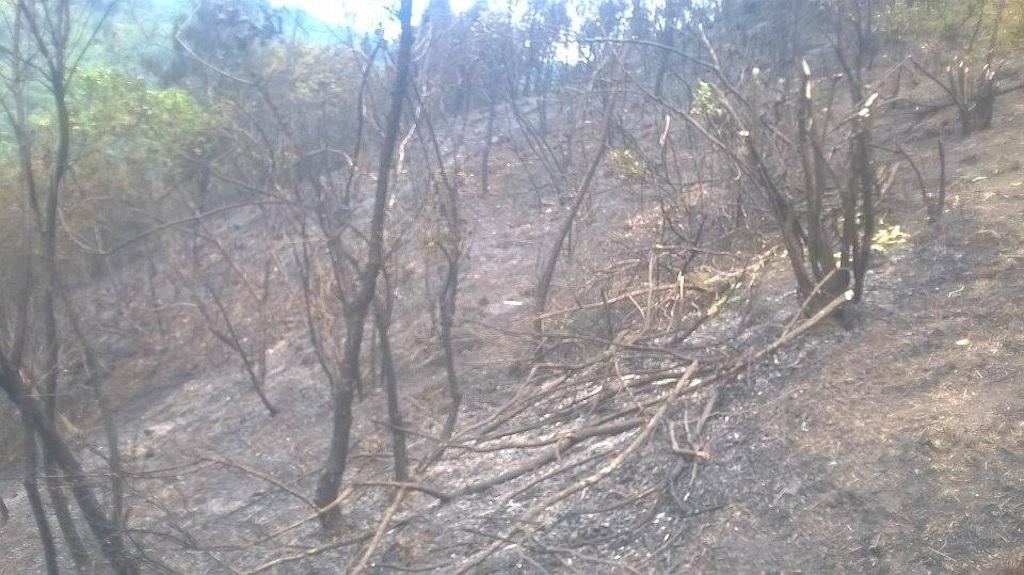 Tuy nhiên, gần 3 giờ đồng hồ, huy động hàng trăm người dân dập lửa, nhưng nhiều ha rừng thông nhiều năm tuổi ở xã Nghi Kiều đã bị lửa thiêu rụi.