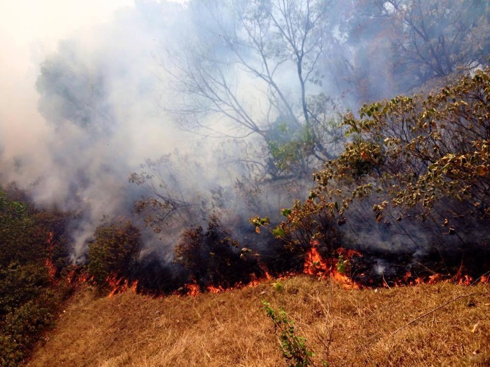 Vào cháy rừng thông xảy ra trước đó, vào lúc 3h sáng ngày 18/7, tại khu vực xã Khánh Sơn, huyện Nam Đàn, Nghệ An.