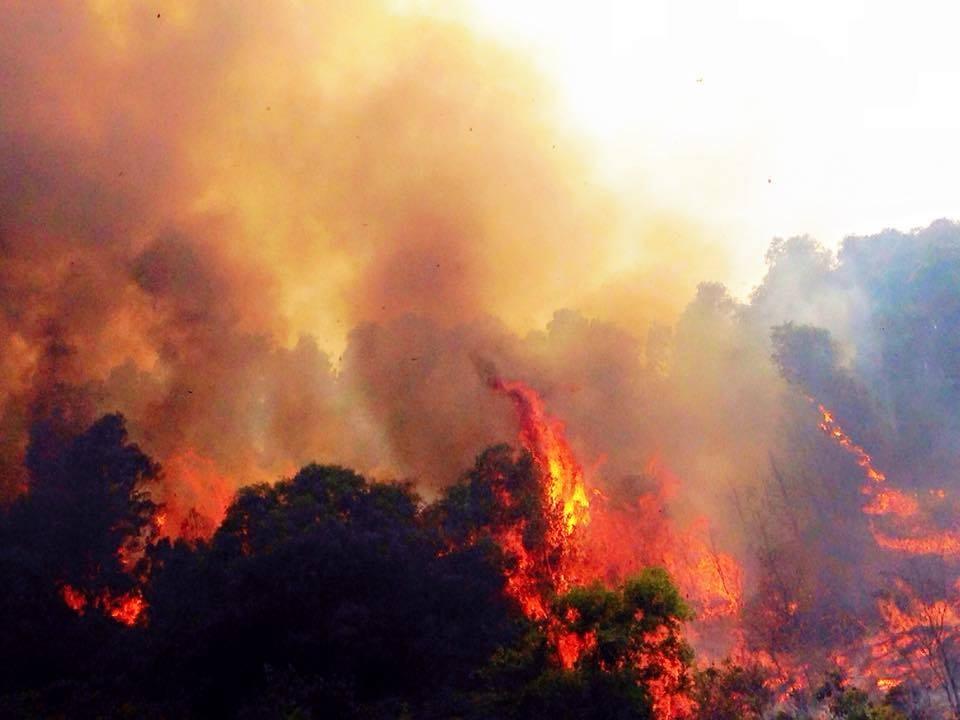 """Rừng thông nhiều năm tuổi bị """"giặc lửa"""" thiêu cháy - 7"""