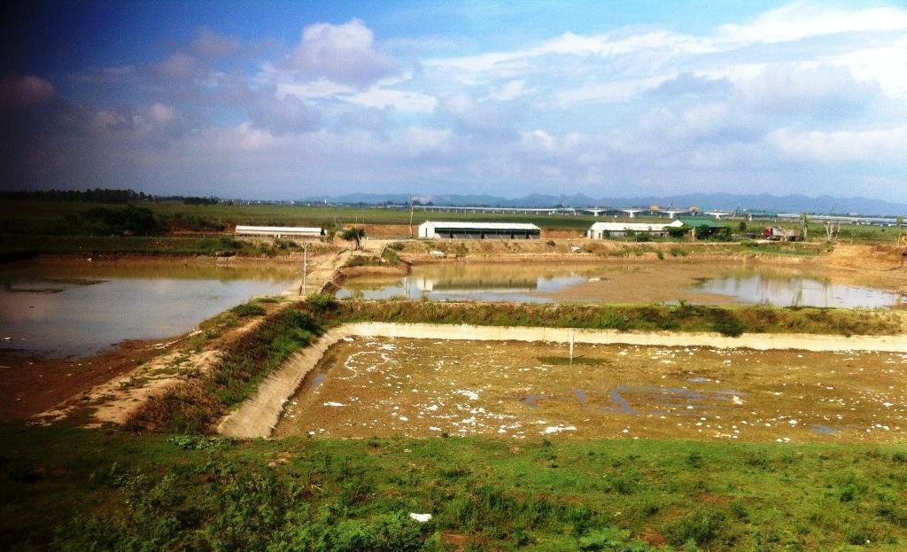 Phía xa xa trong khu trang trại này có mấy đàn vịt trời.