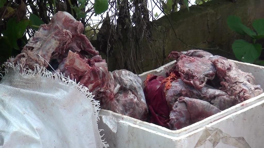 """""""Mật phục"""" bắt quả tang cơ sở tàng trữ gần 200 kg nội tạng, thịt bò bốc mùi - 1"""