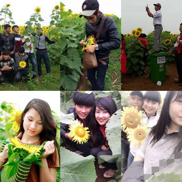 Những hành động bẻ hoa bị lên án trên diễn đàn giới trẻ Nghệ An (ảnh: FB Nghệ An)