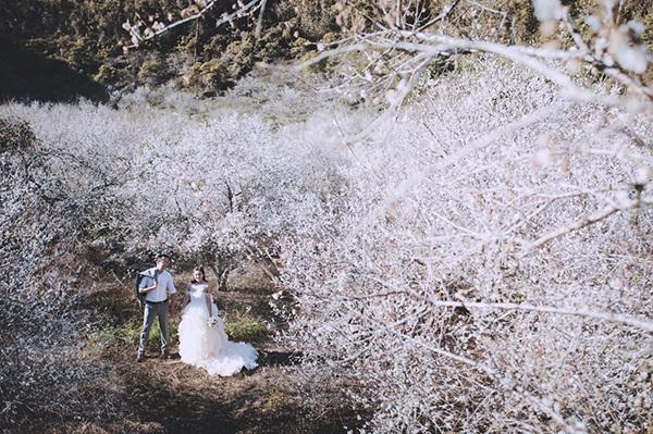 Bộ ảnh cưới tuyệt đẹp giữa thiên đường hoa mận trắng Mộc Châu - 7