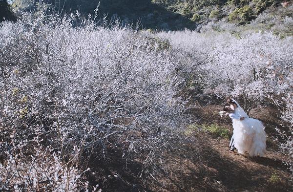 Bộ ảnh cưới tuyệt đẹp giữa thiên đường hoa mận trắng Mộc Châu - 3
