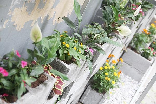 Các loài hoa xinh đẹp toả hương trong khu vườn