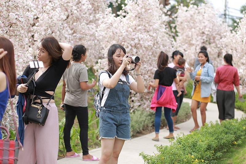 Vào ngày giữa tuần, bạn trẻ vẫn nườm nượp ghé thăm nơi đây để chụp ảnh, ngắm hoa.