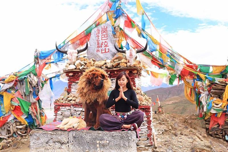 Yoga cạnh một chú chó Ngao ở Tây Tạng.