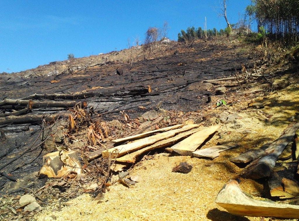 Việc các chủ rừng quản lý không chặt sẽ cũng dẫn đến tình trạng phá rừng, khai thác tràn lan