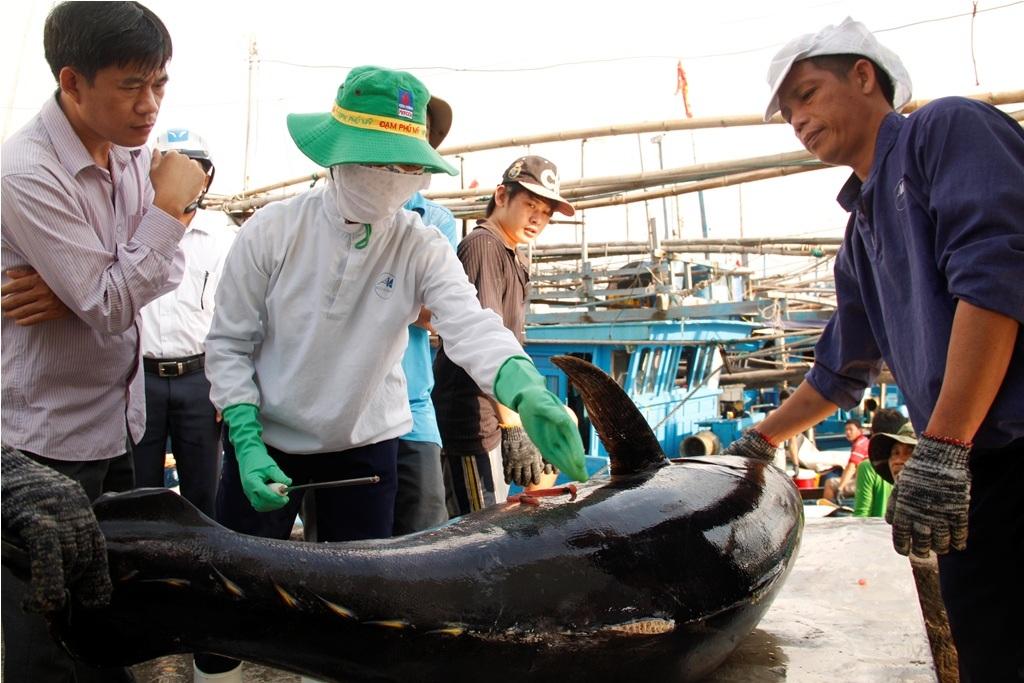 Cá ngừ được bảo quan tốt nên chất lượng cũng dần được cải thiện
