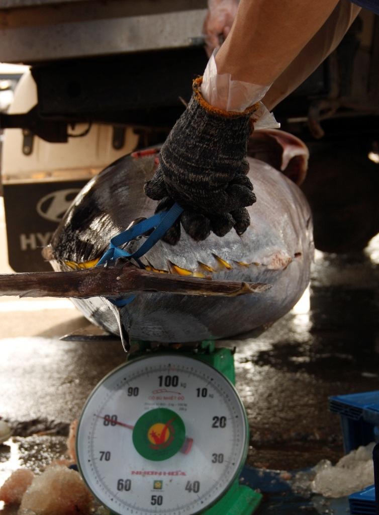 Nếu cá không bán được qua Nhật thì được thu mua với giá thị trường và hỗ trợ thêm 3.000 đồng/kg