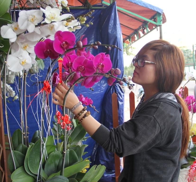Hoa lan hút hàng ngày bán đầu tiên tại đường hoa xuân Nguyễn Tất Thành (TP Quy Nhơn)
