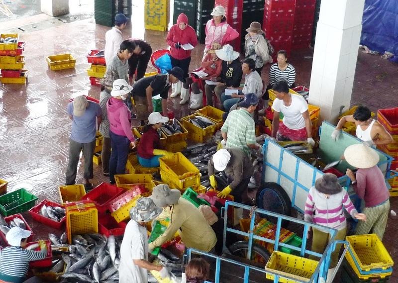 Chợ cá ở cảng cá nhộn nhịp ngày cuối năm