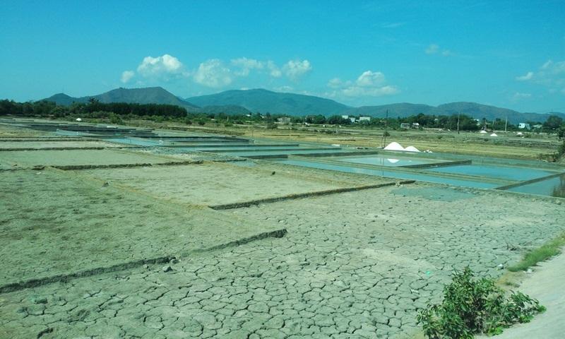 Nhiều diện tích muối bỏ hoang vì giá muối quá thấp chỉ 250 đồng/kg muối đất tại ruộng, muối trải bạt được 700 đồng/kg