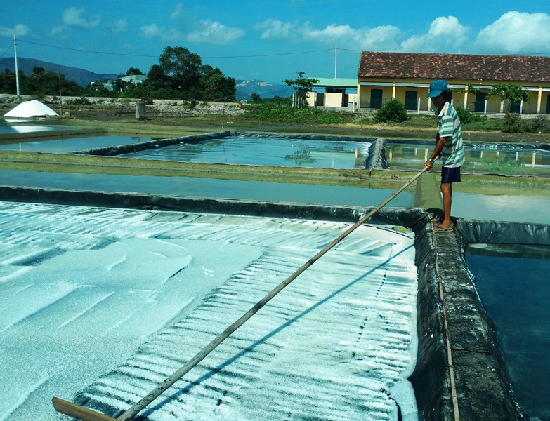 Giá muối thấp diêm dân chán nản không muốn làm muối