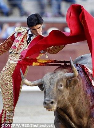 Anh là huấn luyện viên đấu bò chuyên nghiệp tại Tây Ban Nha (Ảnh: REX)