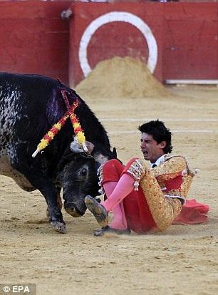 Con bò tót nặng gần 500 kg bắt đầu tấn công Barrio (Ảnh: EPA)