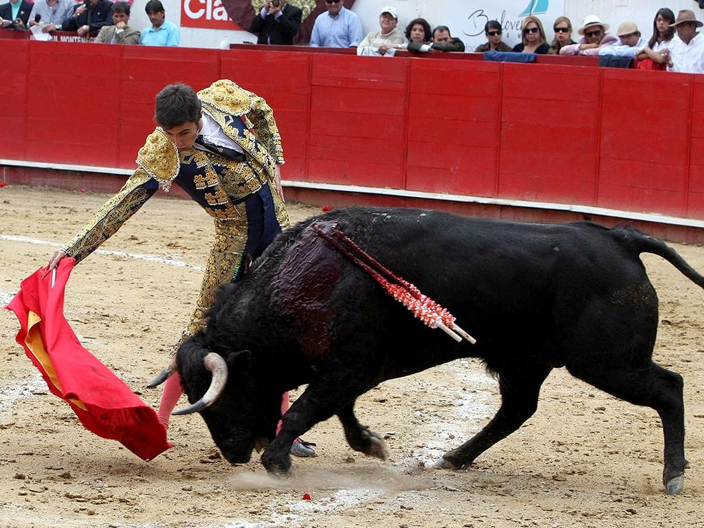 Đấu bò là môn thể thao có lịch sử lâu đời tại Tây Ban Nha (Ảnh: Dailymail)