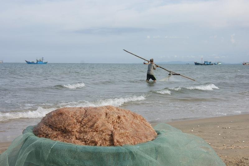 Khuyếc biển tại Quảng Bình đạt yêu cầu các chỉ tiêu về an toàn thực phẩm