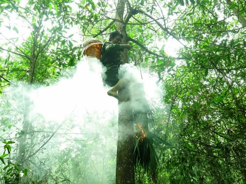 Sau khi châm đuốc, anh Khương đeo một cái dao nhọn bên hông, lấy một sợi dây thừng dài bỏ vào gùi rồi bắt đầu buộc đầy từ gốc cây để lên