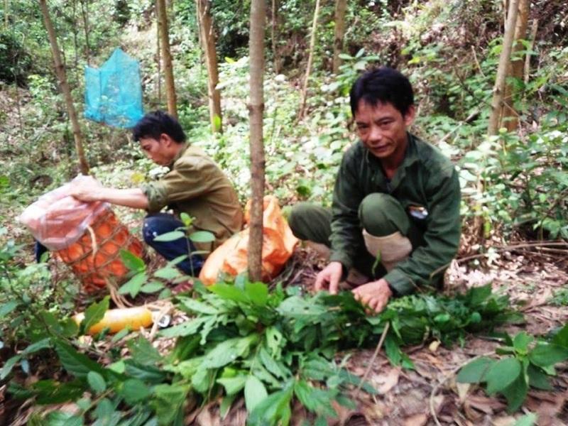 Công tác chuẩn bị để đánh ong rừng