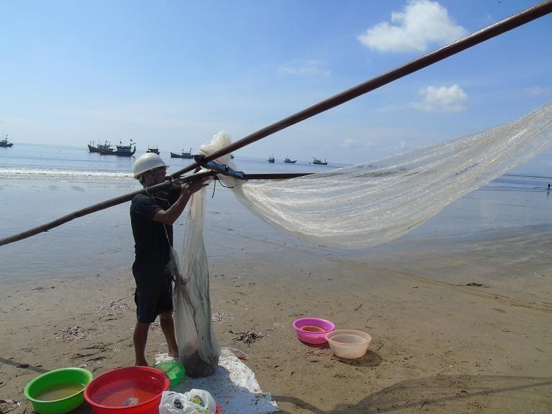 Khuyếc biển mang lại nguồn thu nhập đáng kể cho người dân vùng biển trong thời điểm khó khăn.